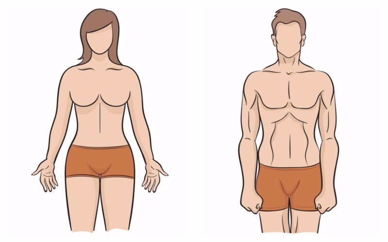 Schultern schmale hüften frau breite Wie Du