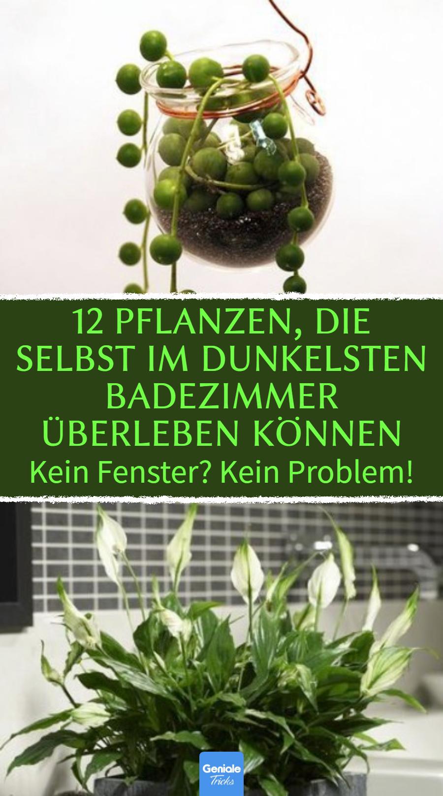Ideal fürs Bad 20 Pflanzen, die kaum Sonnenlicht brauchen