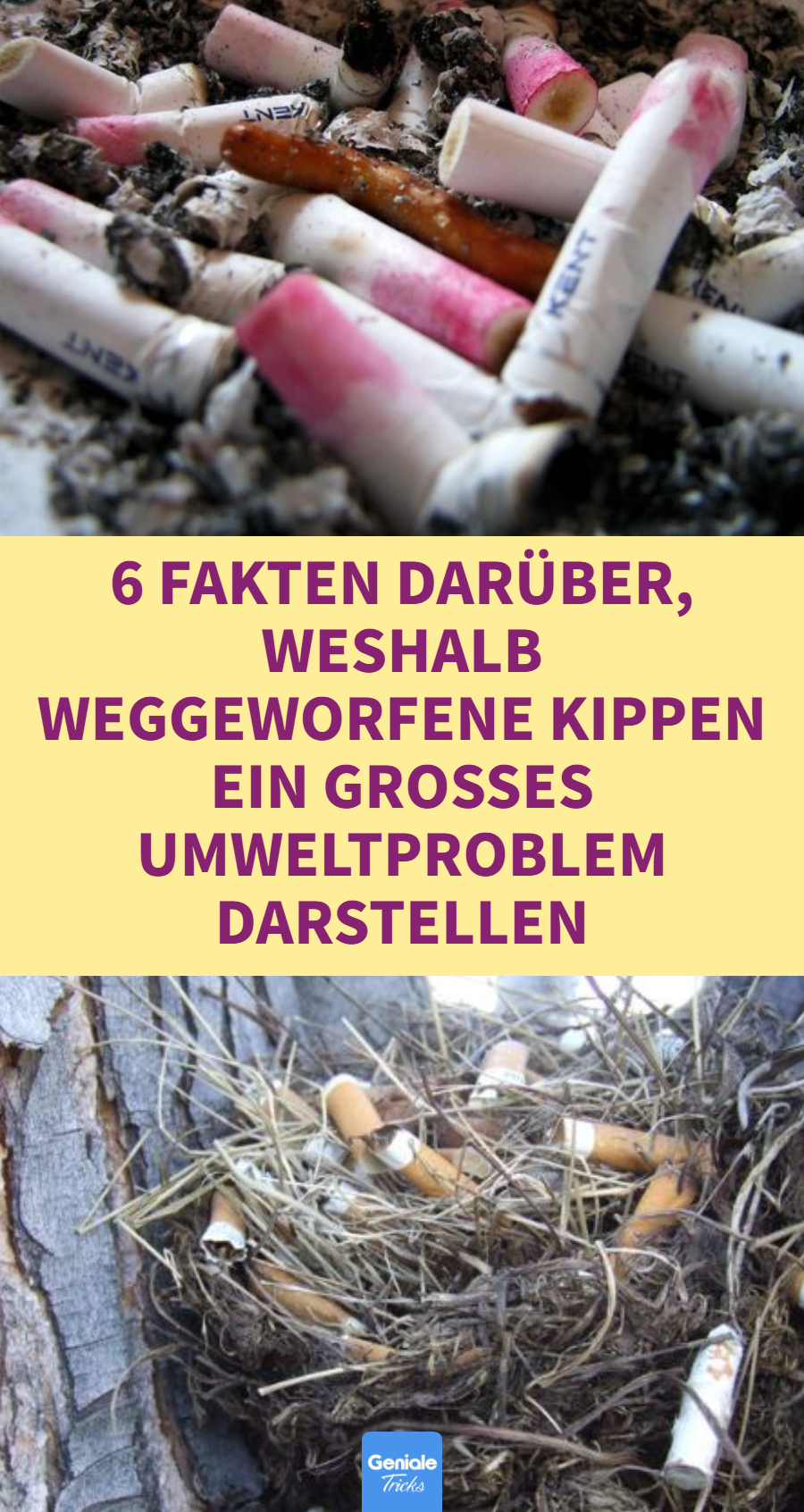 Umweltproblem weggeworfene Zigarettenkippen: 6 Fakten