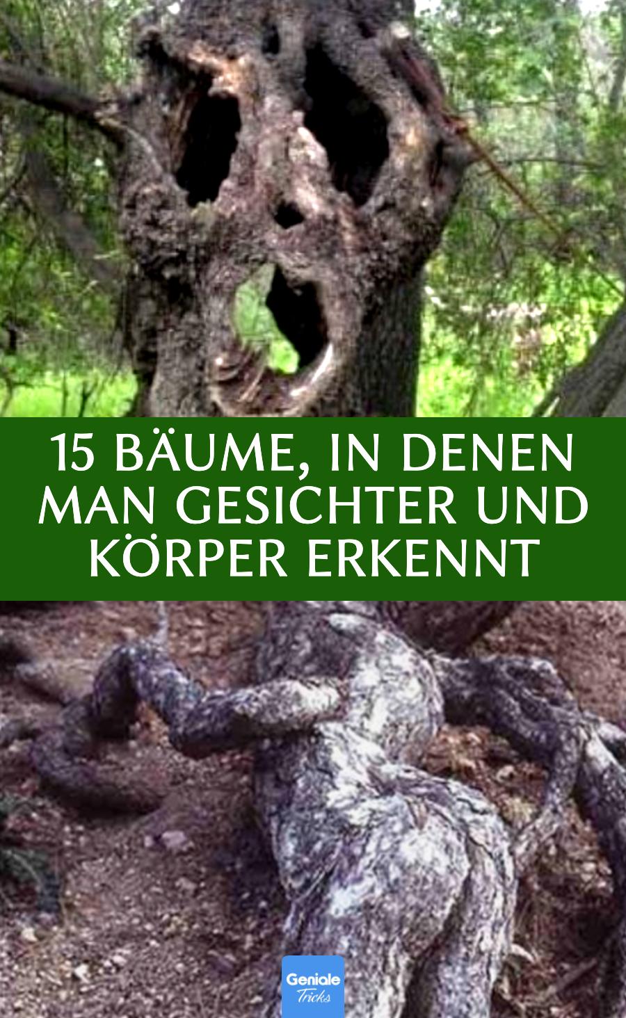 Bäume, in denen man Gesichter erkennt