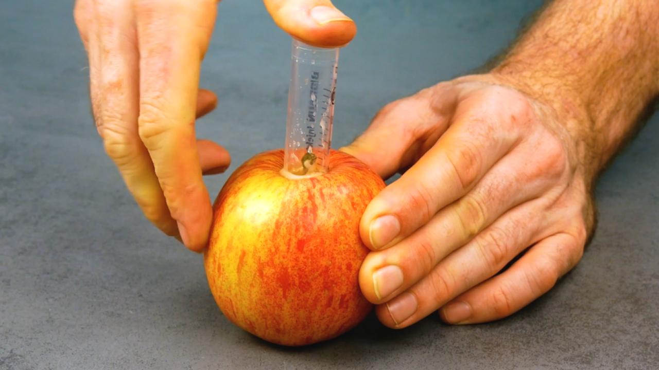 Granatapfel entkernen und Hokkaido schälen   9 Essenstricks