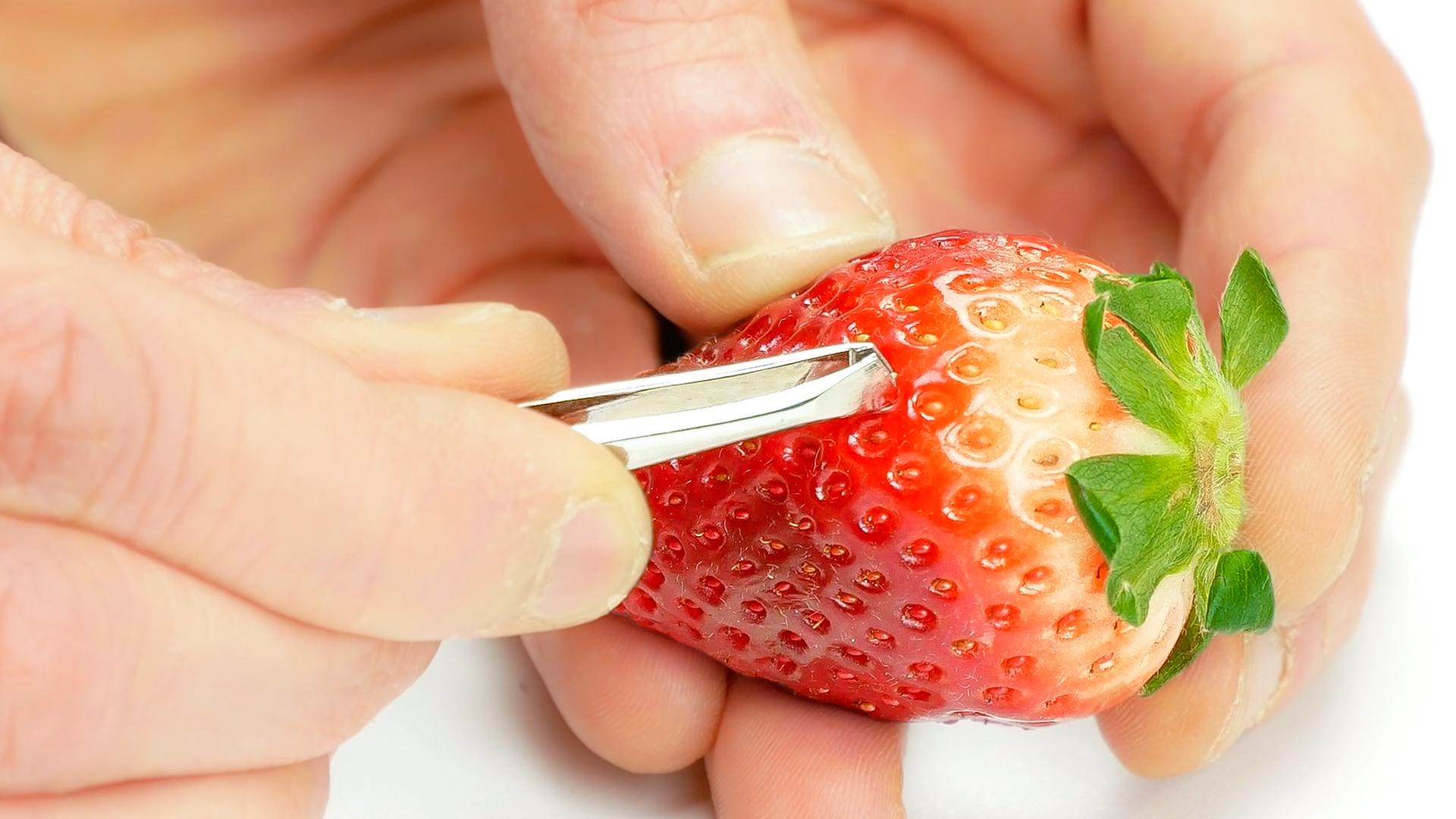 Samen werden aus Erdbeere geholt